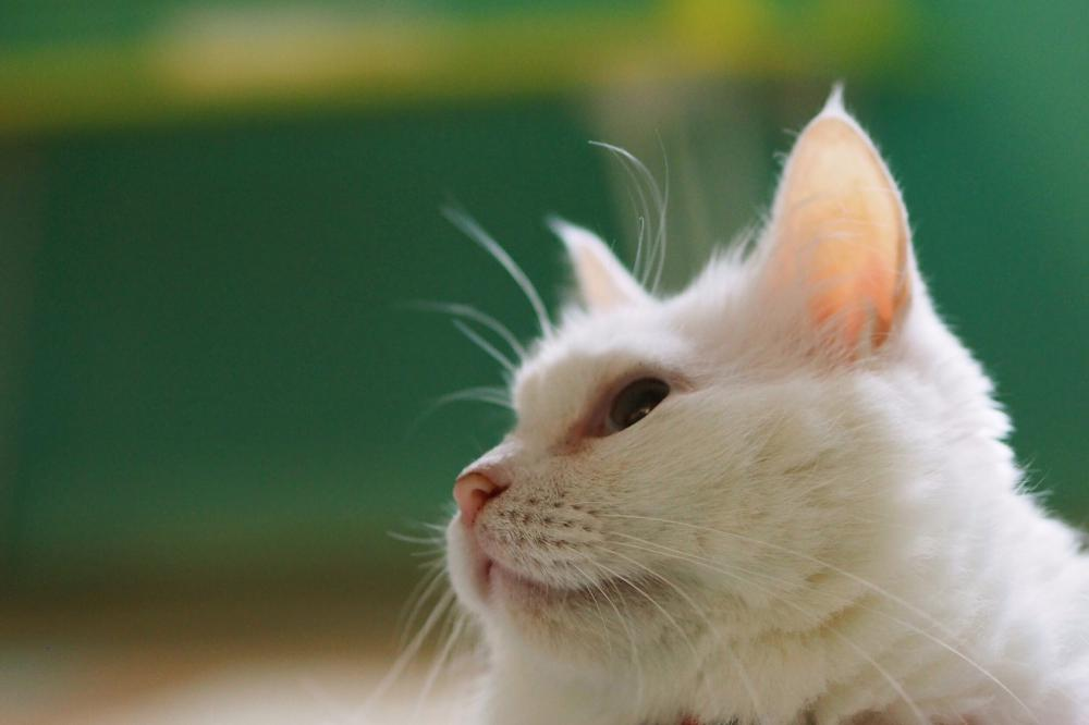 保護猫カフェHOGOYA